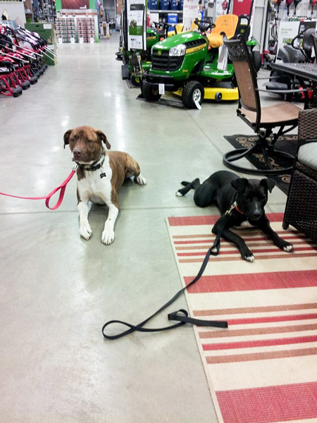 St Louis Dog Trainers - Canine Life Skills