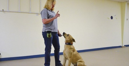 Teaching your dog the meaning of language
