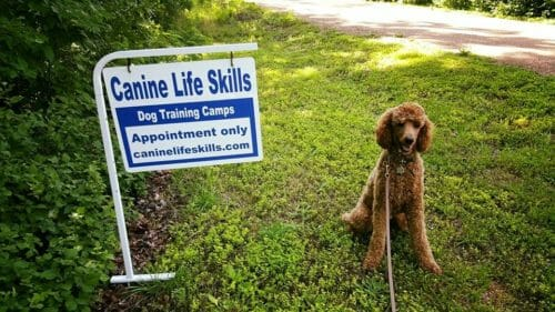 Dog Friendly Bootcamps