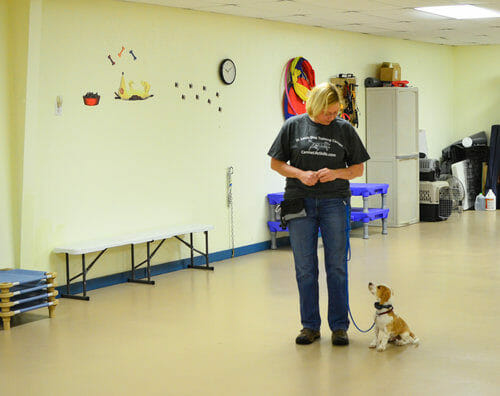 One on one private dog training
