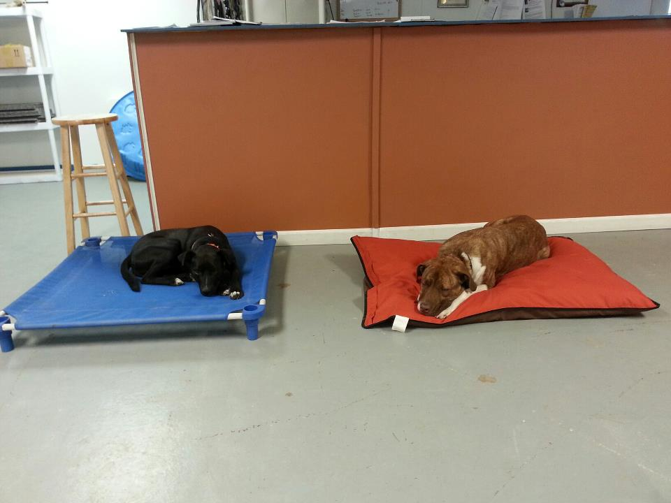 How To Make A Place Board For Dog Training